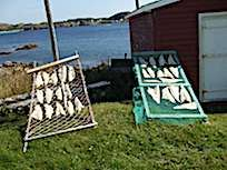 Drying Salt Fish with Seaport Strollers Twillingate NL